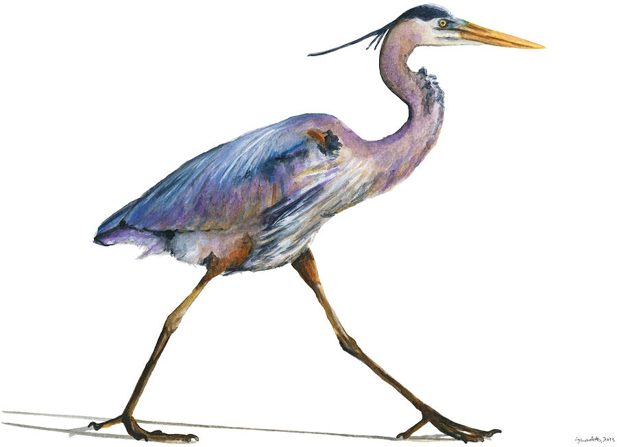 Bird Painting - Great Blue Heron Strolling by Carlo Ghirardelli