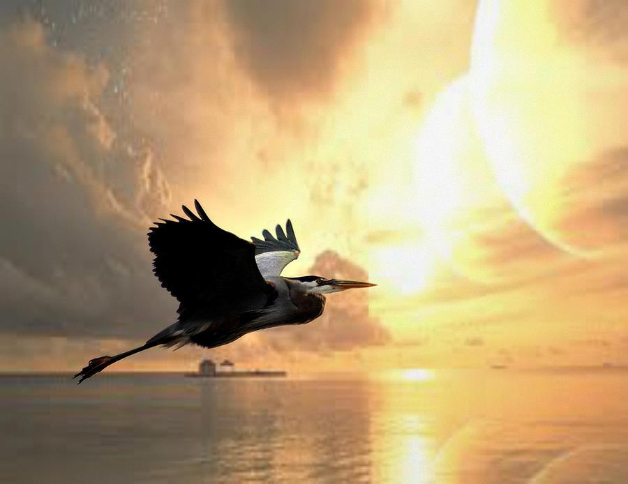 Great Blue Heron Photograph - Great Blue In Flight 7 by Marty Koch