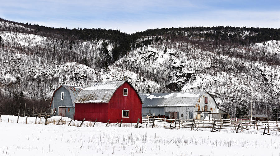Country Life Photograph - Great Canadian Red Barn In Winter by Peter v Quenter