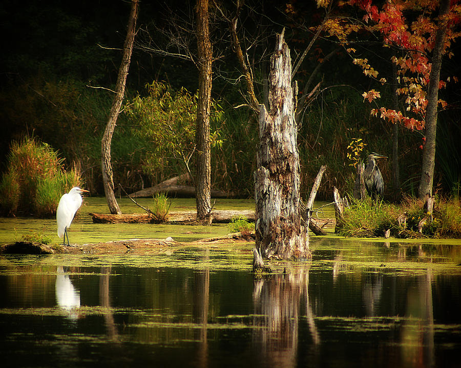 Hovind Photograph - Great Egret And Great Blue Heron by Scott Hovind