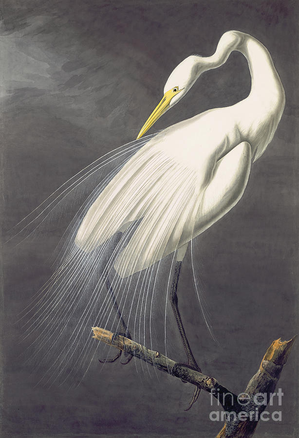 Great Egret Painting