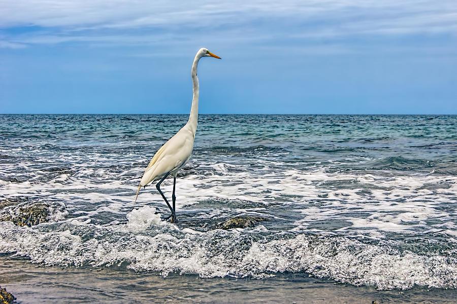Great Egret Photograph - Great Egret by Olga Hamilton