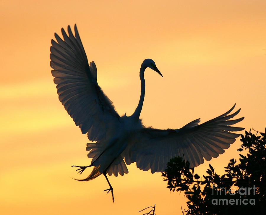 GREAT EGRET SUNSET BALLET by John F Tsumas