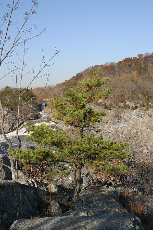 Great Photograph - Great Falls Va - 12121 by DC Photographer