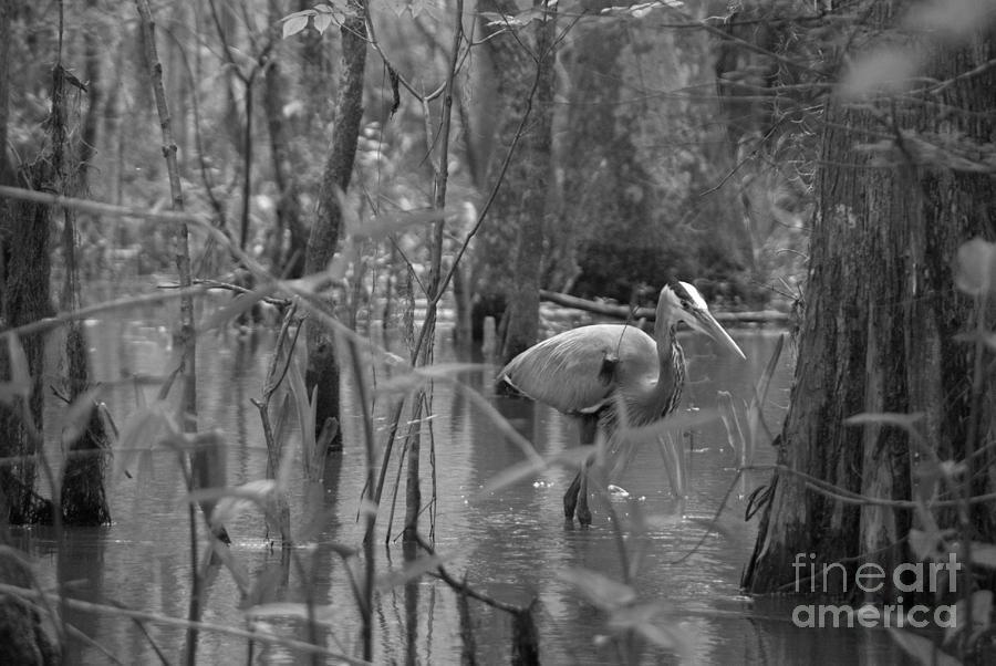 Great Honey Blue Swamp by Anna Burdette