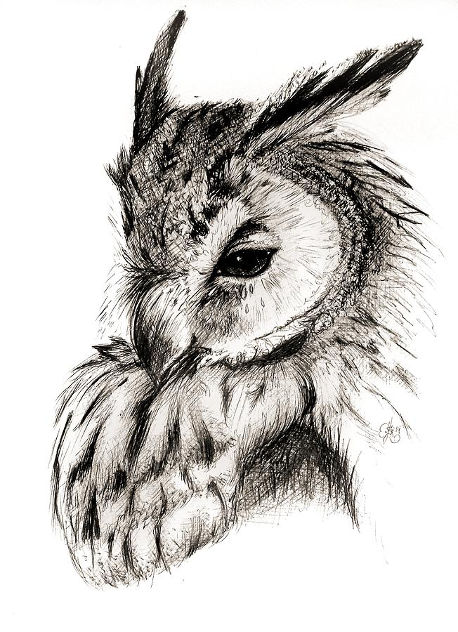 Great Horned Owl 1 Drawing By Scarlett Royal