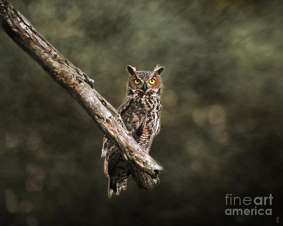 Great Horned Owl Photograph - Great Horned Owl I by Jai Johnson