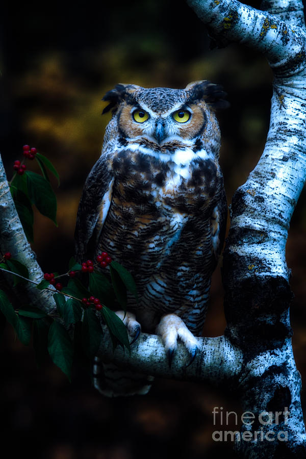 Michigan Photograph - Great Horned Owl II by Todd Bielby