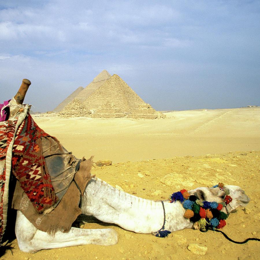 Great Pyramids Of Giza And Resting Photograph by Hisham Ibrahim