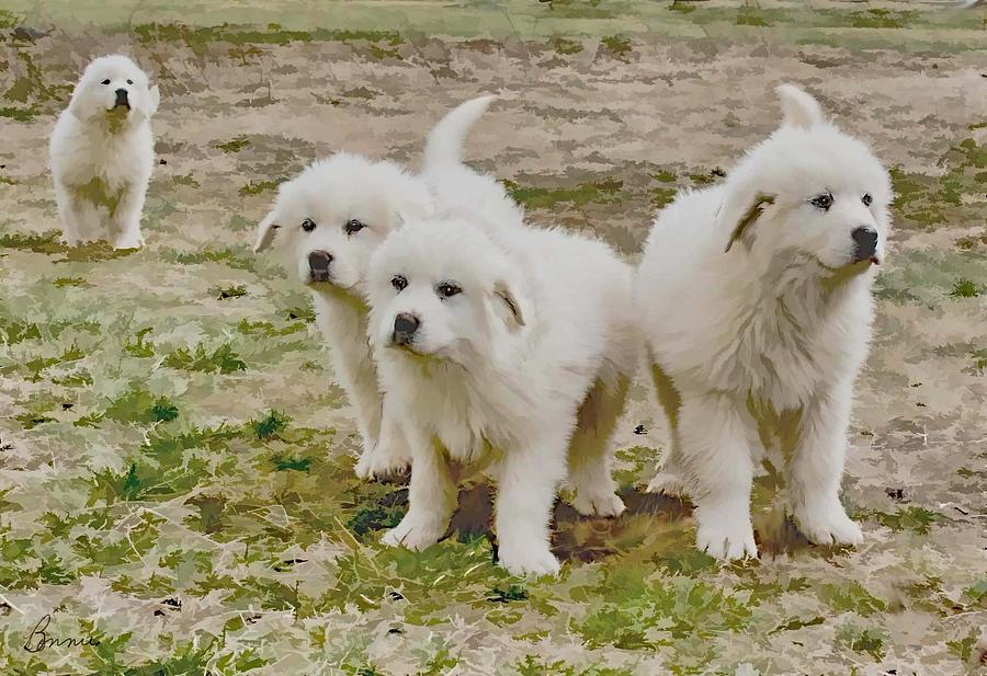Dogs Photograph - Great Pyranese Puppies by Bonnie Willis