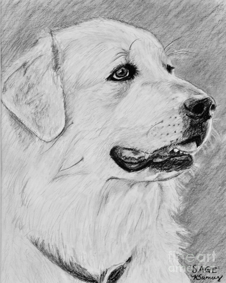 Great pyrenees in profile drawing by kate sumners great pyrenees drawing great pyrenees in profile by kate sumners ccuart Choice Image