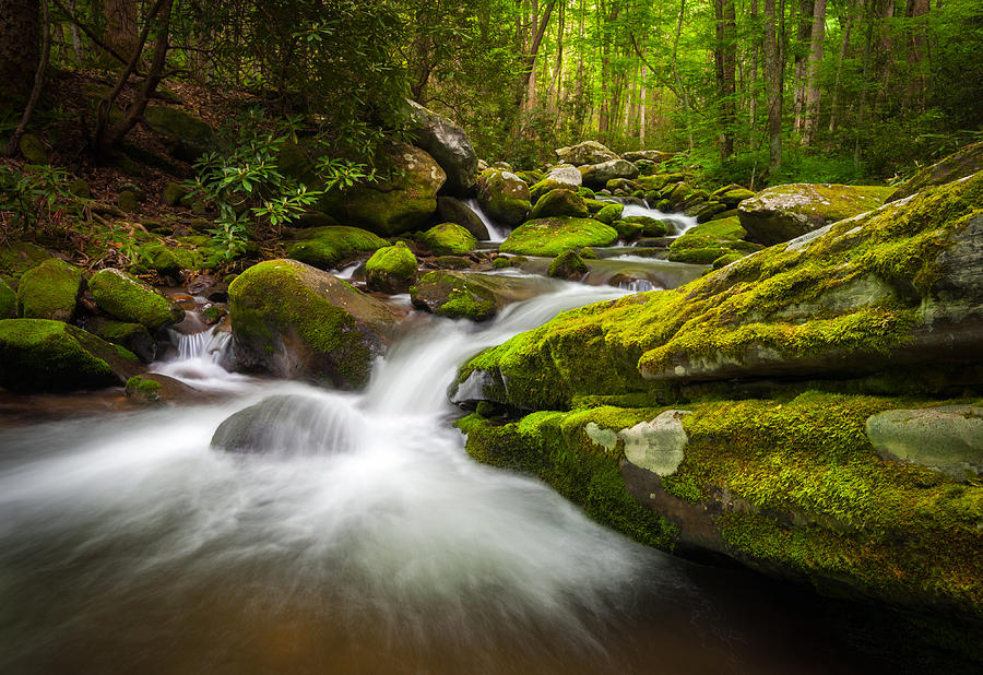 Great Smoky Mountains National Park Photograph - Great Smoky Mountains Gatlinburg Tn Roaring Fork - Gift Of Life by Dave Allen