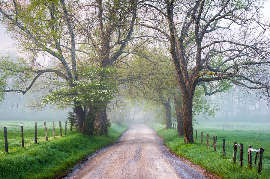 Bloom Photograph - Great Smoky Mountains National Park Cades Cove Country Road by Dave Allen