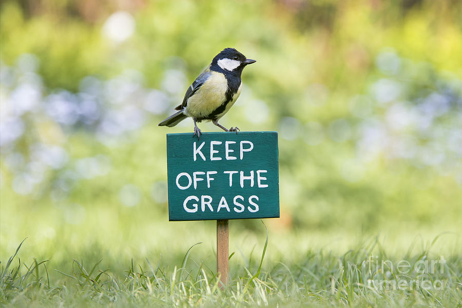 Great Tit Photograph - Great Tit On A Keep Off The Grass Sign by Tim Gainey