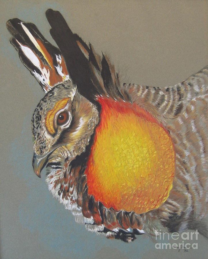 Greater Prarie Chicken by Nancy  Parsons