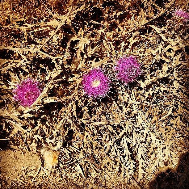 Summer Photograph - #greece #kalamaki #flower #summer by Lorena Chavarro