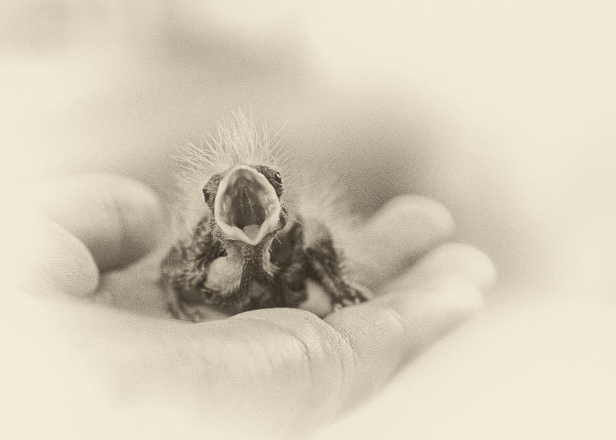 Baby Bird Photograph - Greed by Caitlyn  Grasso