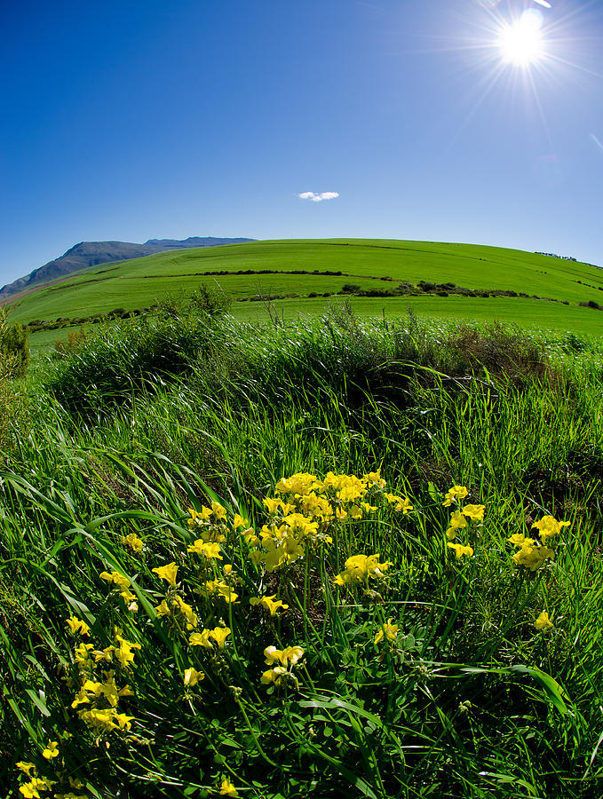 Landscape Photograph - Green Acres by Aaron Bedell