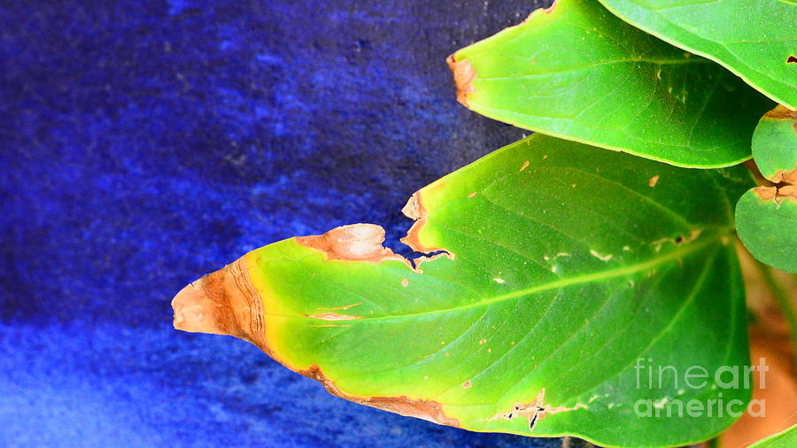 Pot And Leaf  Digital Art - Green And Blue  by Bobby Mandal