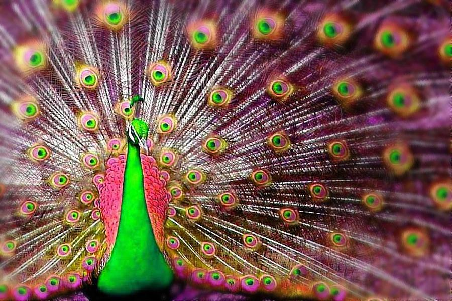 Tropical Bird Digital Art - Green And Pink Peacock by Diana Shively