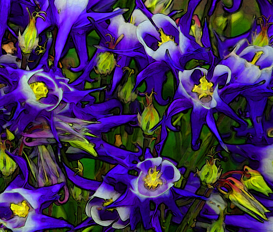 Columbine Photograph - Green And Purple Burst Abstract by James Hammen