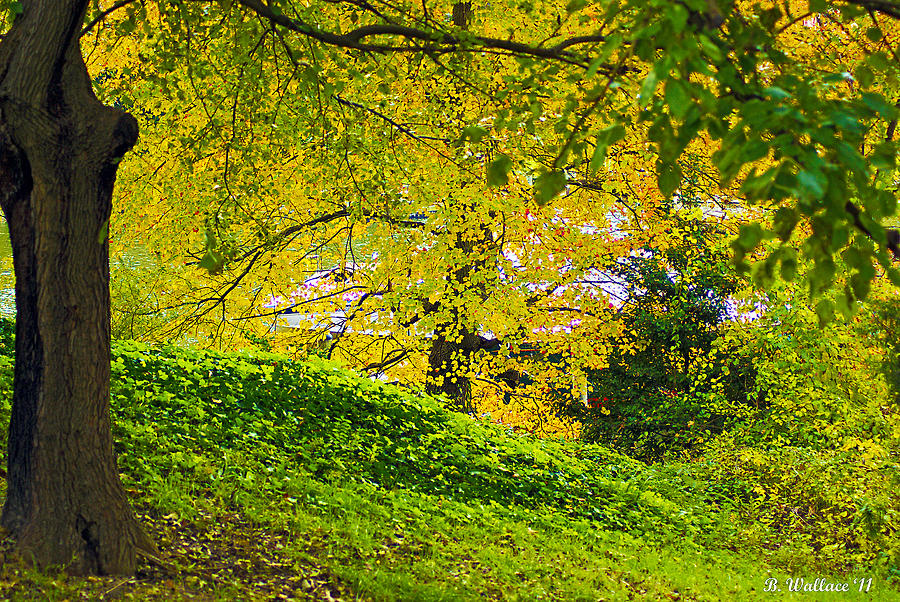 2d Photograph - Green And Yellow by Brian Wallace