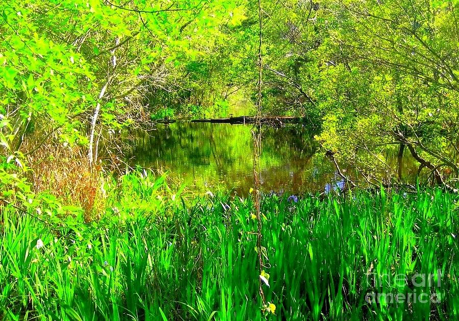 Nature Photography Photograph - Green As Emeralds by Michael Hoard