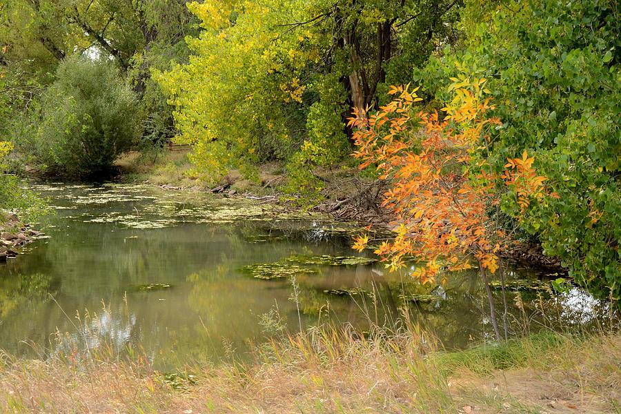 Dakota Photograph - Green Ash In Autumn Foliage by Dakota Light Photography By Dakota