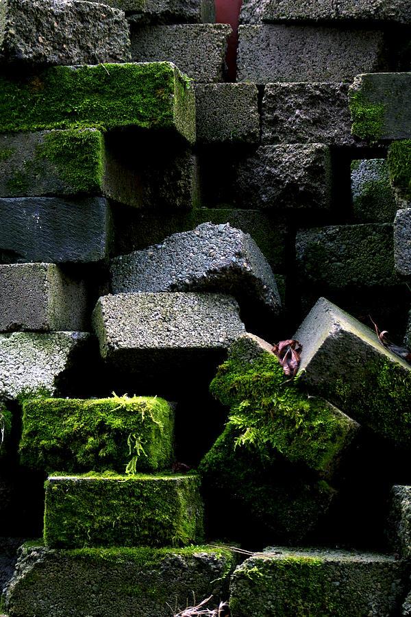 Green Photograph - Green Bricks by Anthony Bean