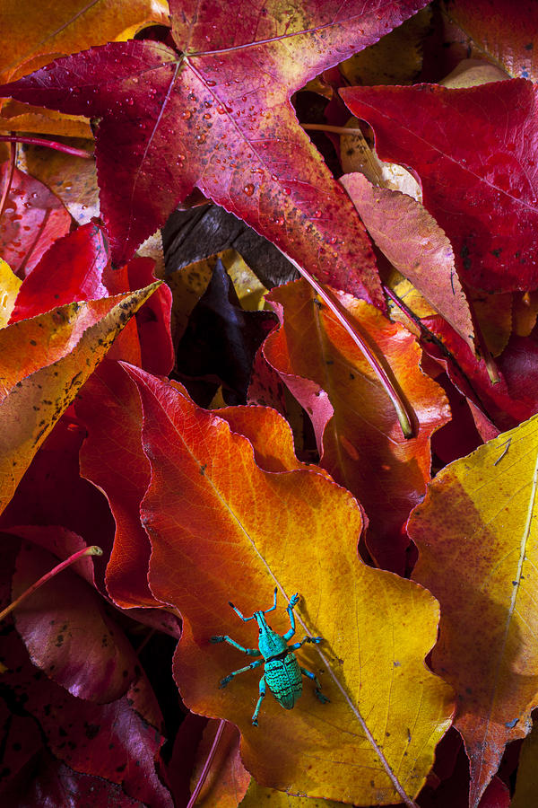 Autumn Photograph - Green Bug by Garry Gay