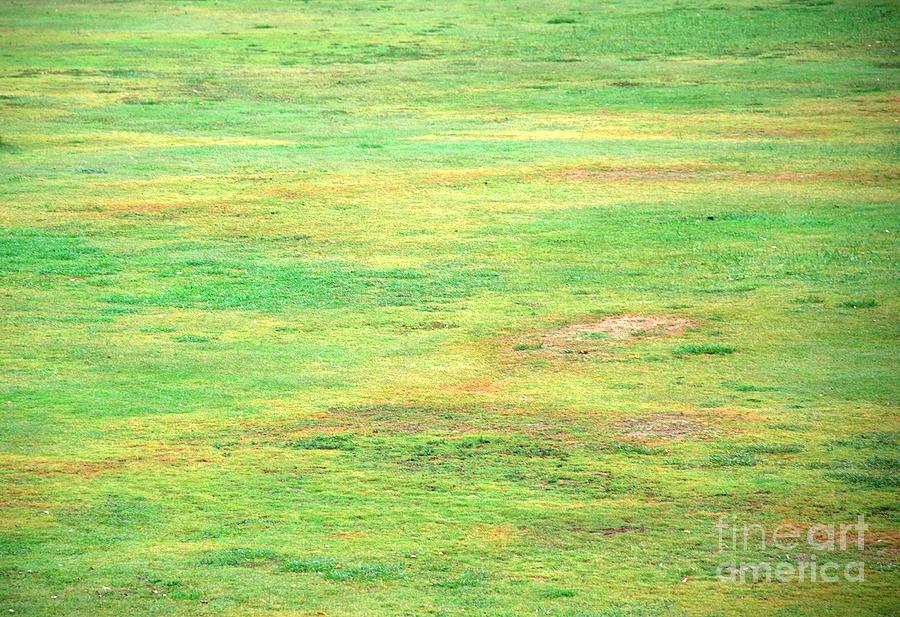 Nature Photograph - Green Carpet by Glimpses Prasad Datar-Archana Padhye Photography
