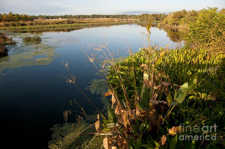 Nature Photograph - Green Cay Wetlands, Fl by Mark Newman