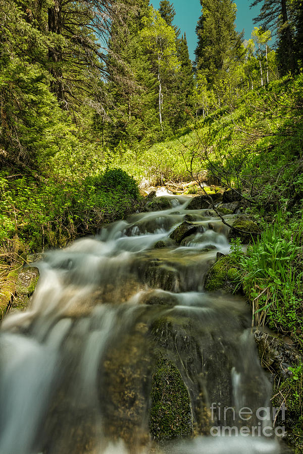 Usa Photograph - Green Colors And A Stream by Mitch Johanson