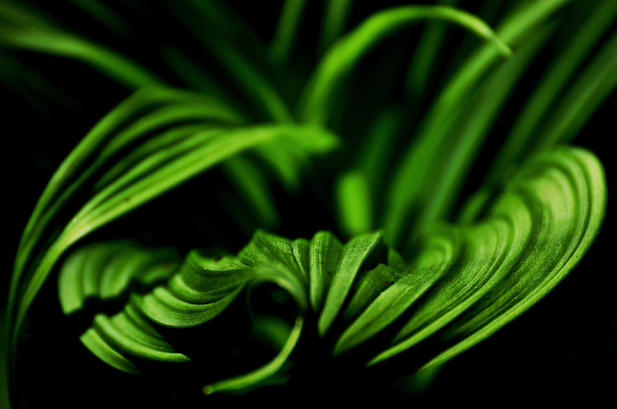 Green Plant Photograph - Green Curves by Mary Anne Williams