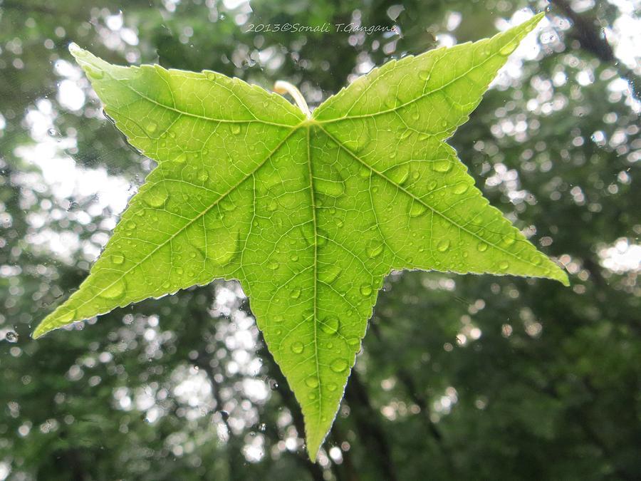 Green Photograph - Green Droplets by Sonali Gangane