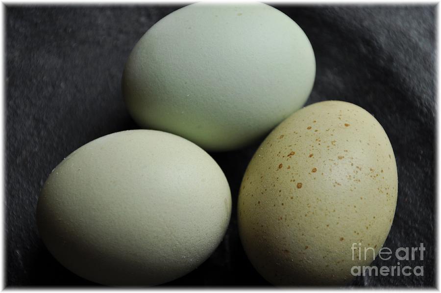 Eggs Photograph - Green Eggs by Cheryl Baxter