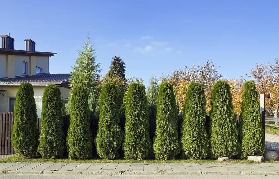 Garden Photograph - Green Fence Of Trees  by Aleksandr Volkov
