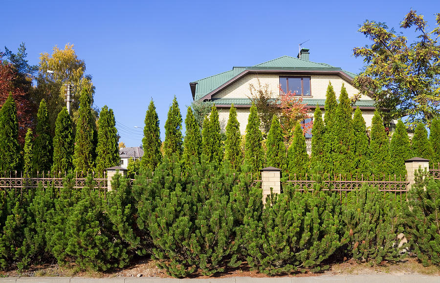 Garden Photograph - Green Fence Of Trees And Shrubs by Aleksandr Volkov