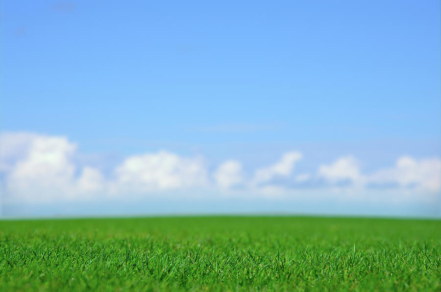 Green Field And Blue Sky Photograph by Johannescompaan