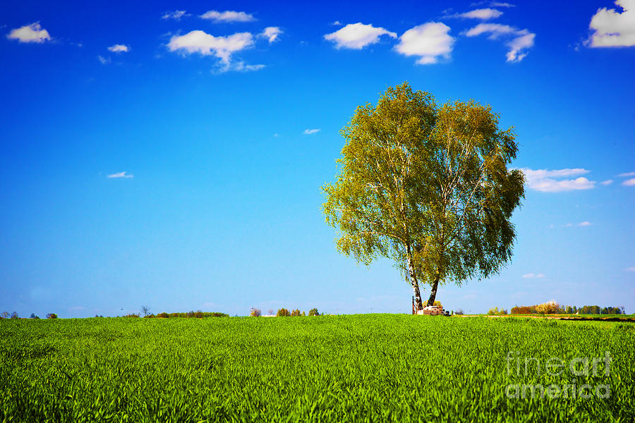 Grass Photograph - Green Field Landscape With A Single Tree by Michal Bednarek