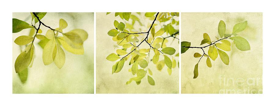 Foliage Photograph - Green Foliage Triptychon by Priska Wettstein