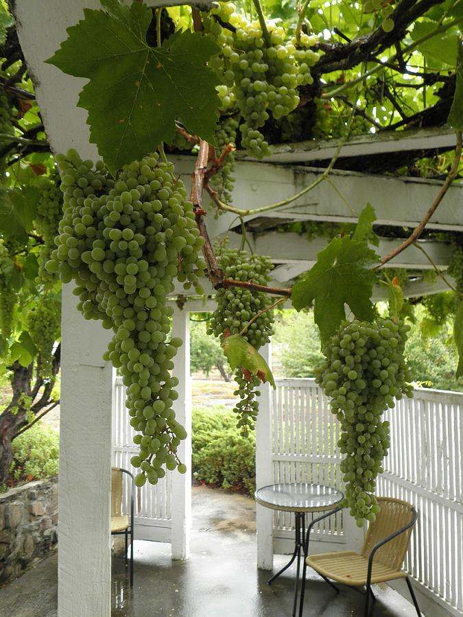 Green Grapes Looking Lush by William McCoy
