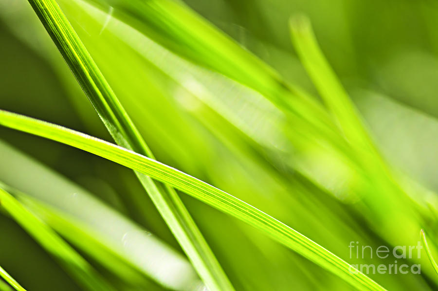 Green Grass Abstract Photograph