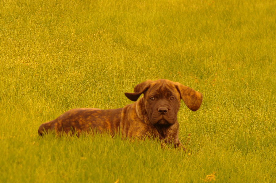 Dogs Photograph - Green Grass And Floppy Ears by Jeff Swan