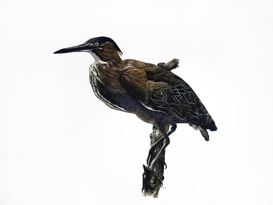 Wildlife Painting - Green Heron by Rachel Root