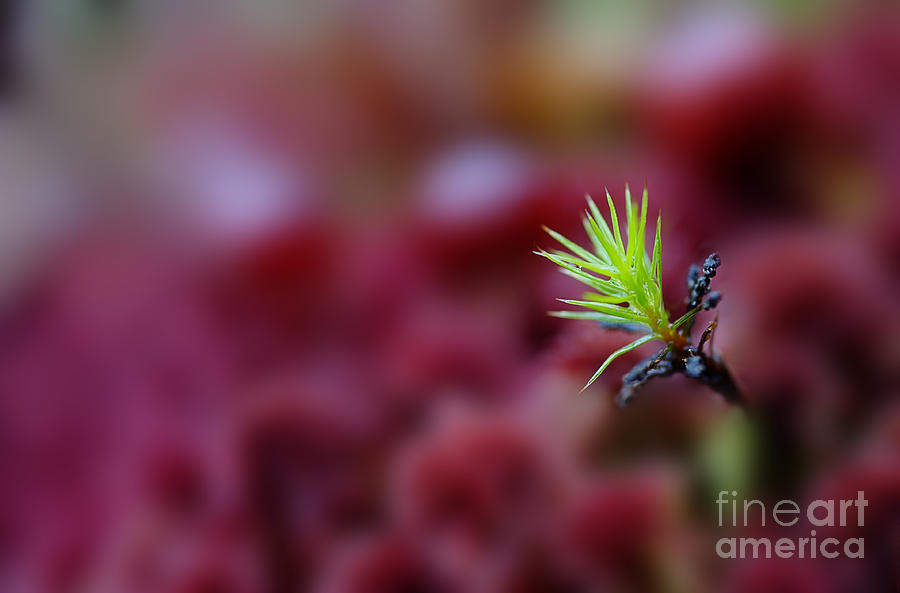 Green Plant Photograph - Green In A Sea Of Red by Dan Friend