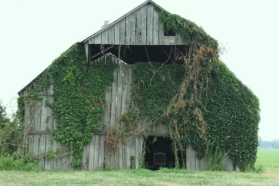 Green Ivy Barn Photograph by Terry Scrivner