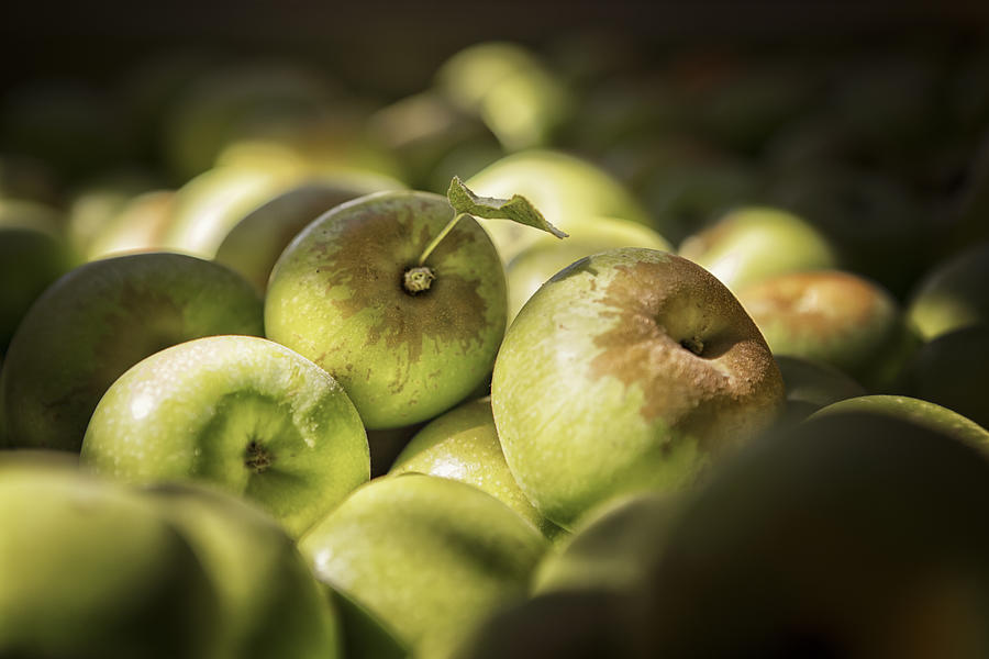 Apples Photograph - Green Jewels by Caitlyn  Grasso