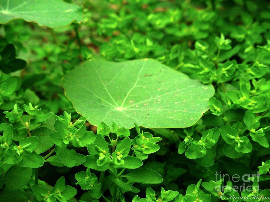 Photograph - Green by Karam Halim