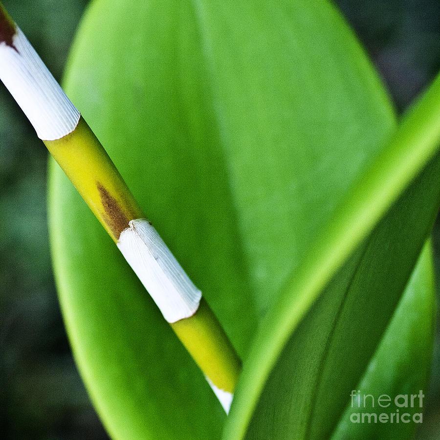 Heiko Photograph - Green Leaves by Heiko Koehrer-Wagner